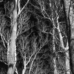 fotografia-conceptual-arboles-5