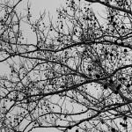 fotografia conceptual arboles