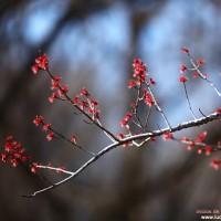 inicios de primavera