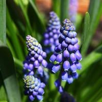 Primavera, by lucuella