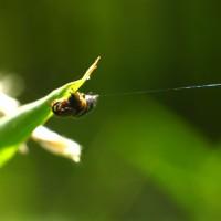 fotos-bichos-lucuella
