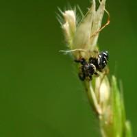 macro-bichos-lucuella
