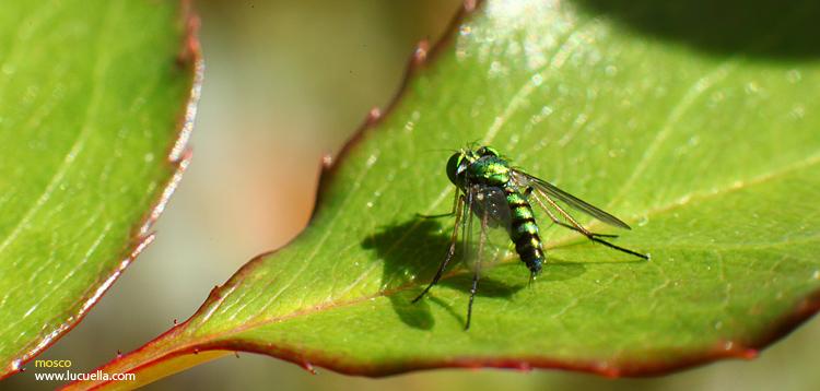 Insectos – macro