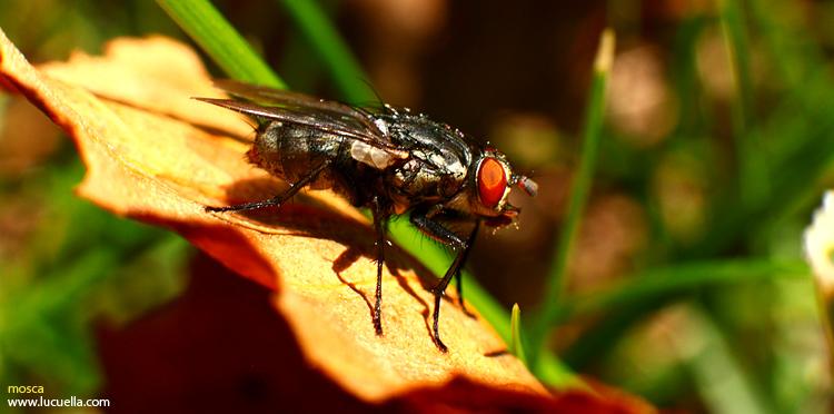 Otros insectos