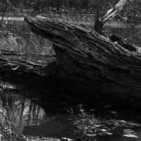Inundación, río Potomac, Virginia