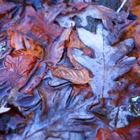 Potomac Falls, finales de otoño