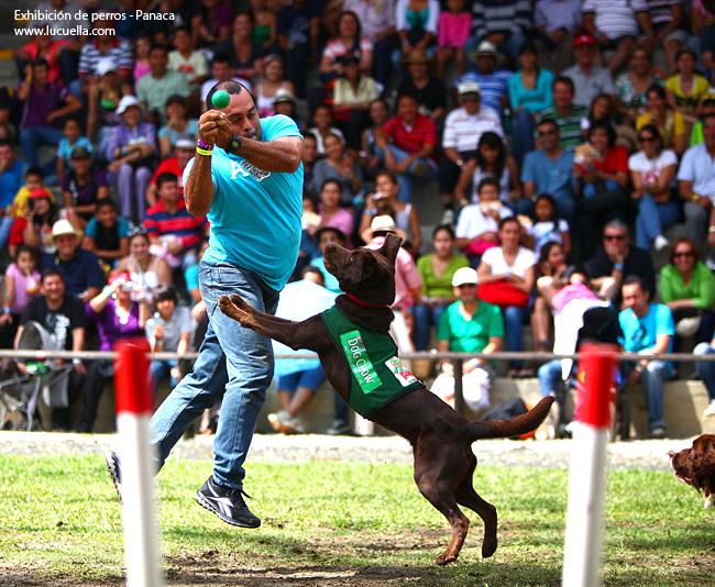 Exhibición de razas caninas