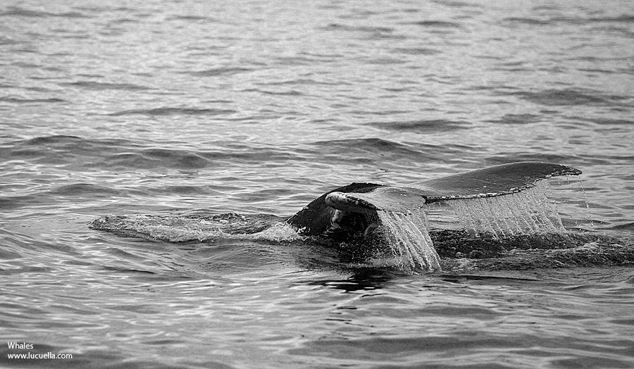 Whales at Virginia Beach