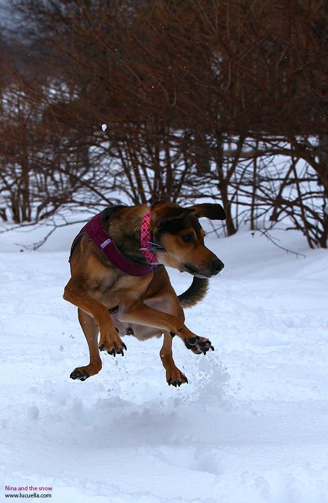 Nina saltando en la nieve