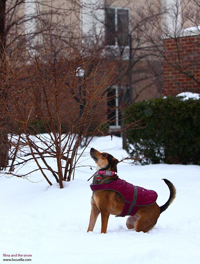Nina esperando bolas de nieve