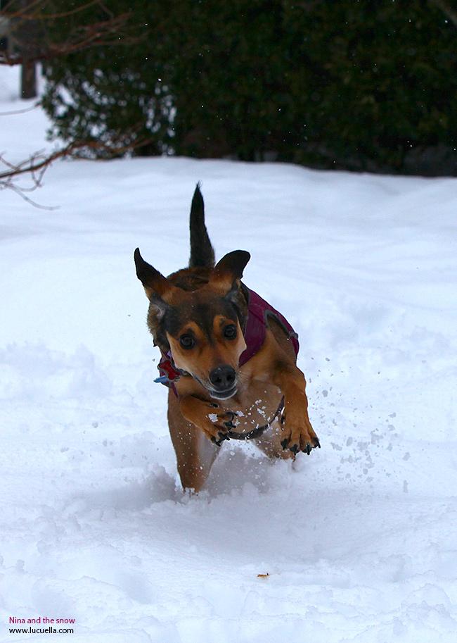 Nina corriendo en la nieve