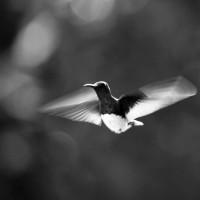 colibrí - fotos en movimiento