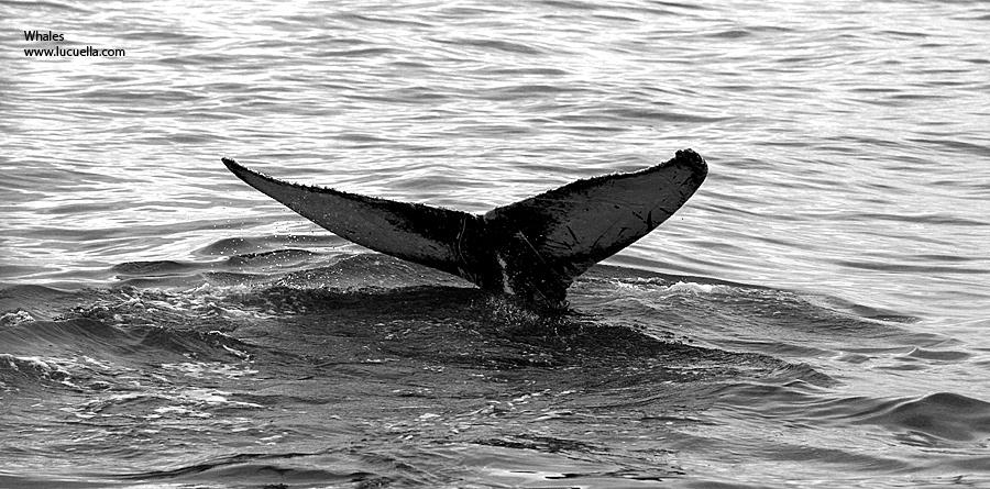 Whales – Virginia Beach